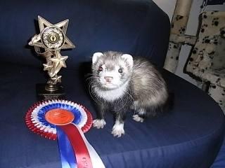 Best in Show winner, Clover (image: (c) 2014 Laura Richards)