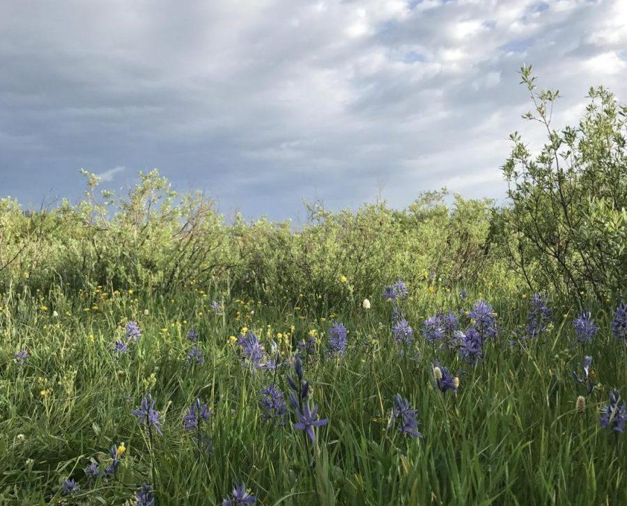 Ecology Club brings Earth Week to life