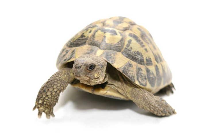 Data Turtle