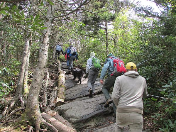 Grandfather Mountain's annual Naturalist Weekend, returning May 13-15, features a variety of activities designed to bring participants closer to nature, including interpretive hikes. Photo courtesy of the Grandfather Mountain Stewardship Foundation