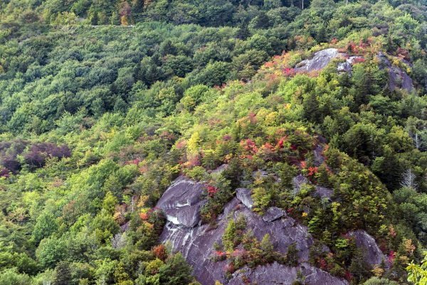While more prevalent at elevations higher than 5,000 feet, fall color is rapidly spreading through the 4,000-foot range, as this scene near the Blue Ridge Parkway's Linn Cove Viaduct demonstrates. As autumn continues its march, higher elevations, like those on the parkway and Grandfather Mountain, will afford leaf-lookers an opportunity to also see the foliage changing in the valleys below. For more fall color photos, visit https://goo.gl/YTWIjJ. Photo by Skip Sickler | Grandfather Mountain Stewardship Foundation