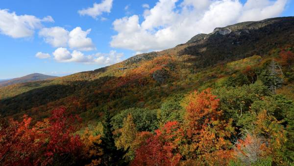 Autumn colors have been a bit late arriving in the North Carolina High Country this year, but the foliage show is beginning to get dramatic. This photograph taken Monday from the Blue Ridge Parkway shows that peak color is probably just a few more days away on the southern slopes of Grandfather Mountain. Photo by Jim Morton | Grandfather Mountain Stewardship Foundation