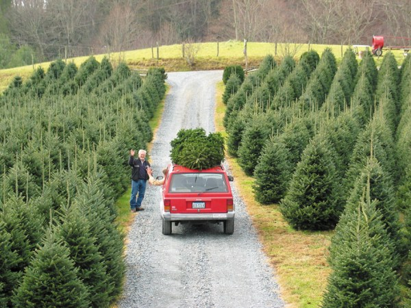 A family takes home a tree for the holidays in a previous year. Photo by Ken Ketchie