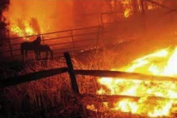 fire-horse-photo