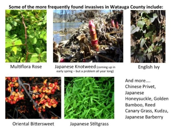 High country invasives