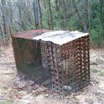 Illegal bear trap. Photos by N.C. Wildlife Resources Commission