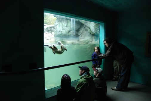 Visitors to Grandfather Mountain watch an otter frolic in the underwater viewing area. The otter habitat will undergo renovations designed to repair and enhance the viewing area starting next month, and the otters are currently off-display. Photo by Helen Moss Davis | Grandfather Mountain Stewardship Foundation.
