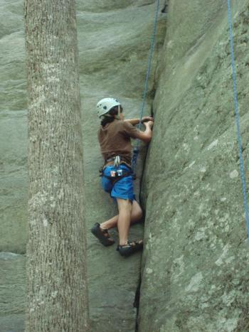 Poplar Tree crack