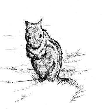Chipmunk drawing copyright Levi Walton.