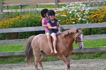 horseshow01