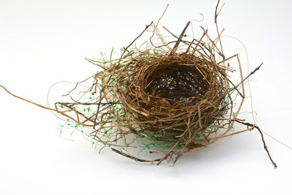 I found this nest on the ground where it had fallen from a tree. Its beauty is marred by the green plastic netting used in its construction. Plastic netting, commonly used for erosion control, poses an entanglement danger not only to young birds, but to their predators and other wildlife. Photograph Copyright James M. Davidson, All Rights Reserved.