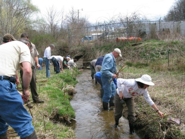 A prior tree planting for stream restoration in Boone.