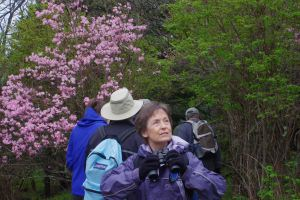 "A participant enjoys the sights and sounds of nature around her while on a ""Trees and Shrubs of the Southern Appalachians"" hike.  This hike, as part of the Grandfather Mountain Naturalist Weekend, will be Saturday at 2 pm on the Grandfather Extension Trail.  Photo by Carly Fleming"