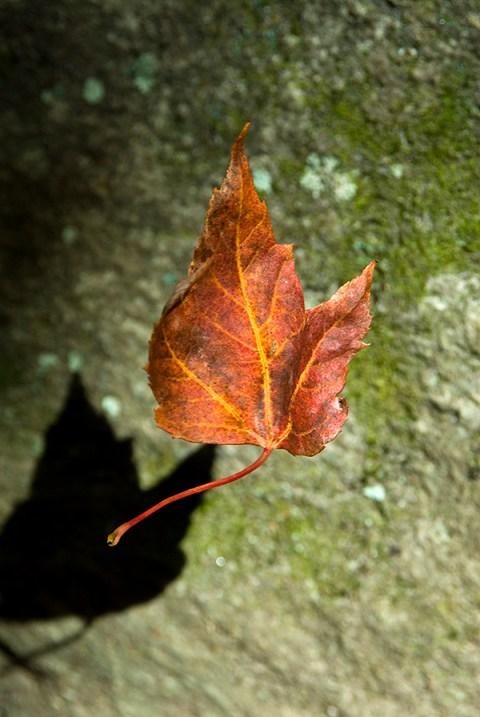 willis_fall_leaves001