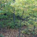 Hoosac Range Trail