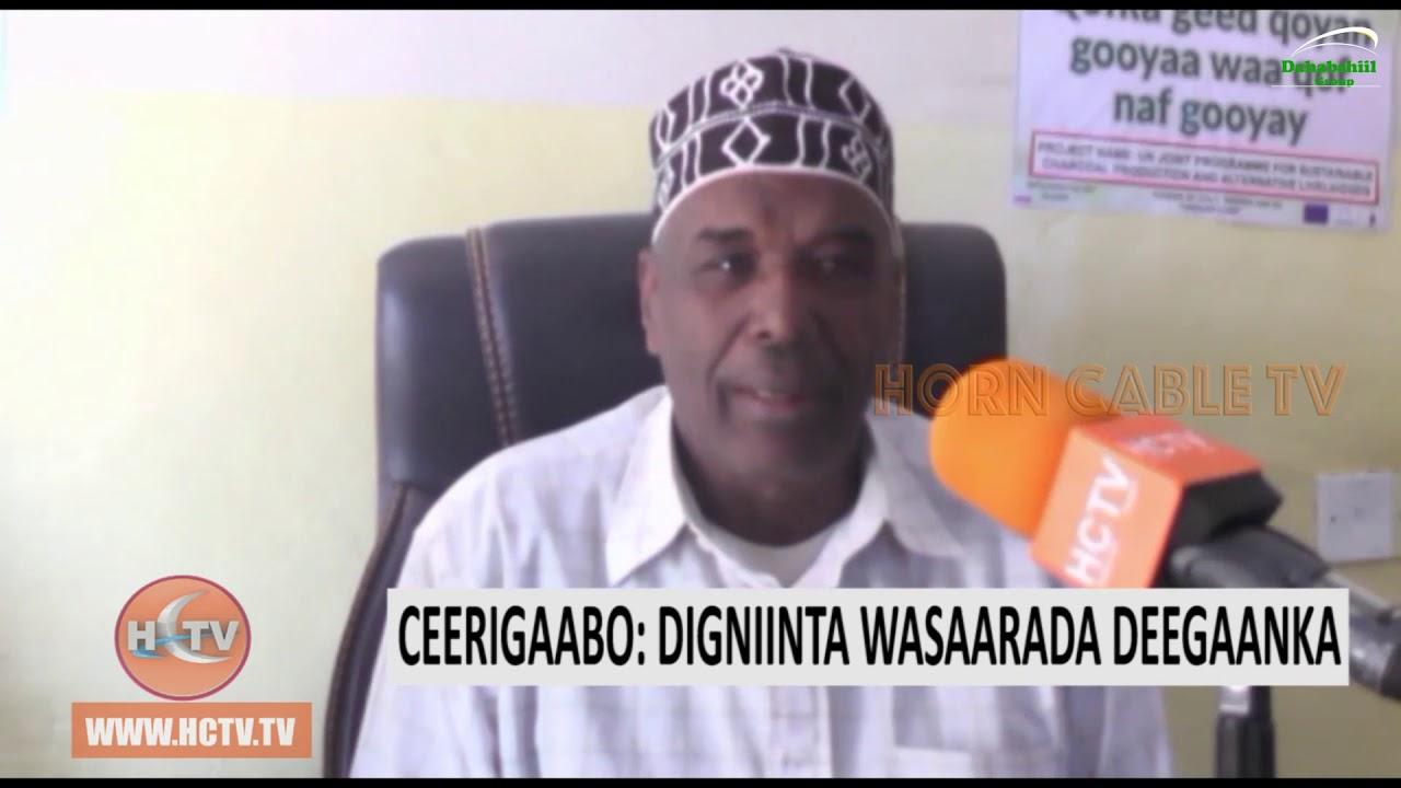 Ceerigaabo : Wasaaradda Deeganka oo Digniino ka soo saartay Xaalufinta Dhirta