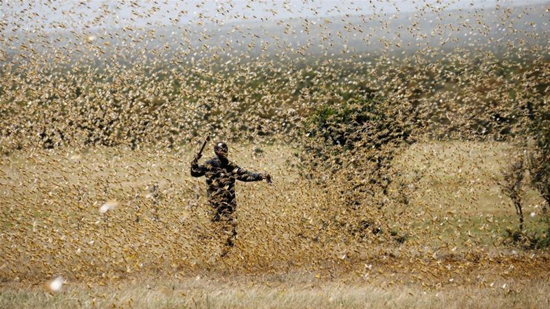 FAO: Coronavirus Oo Carqaladeeyey Dagaalkii Ayaxa Ee Dalalka Bariga Afrika