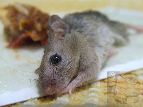 raton3.jpg
