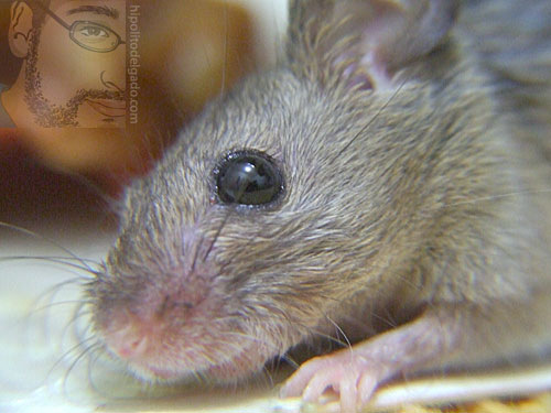 raton4.jpg