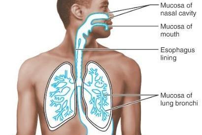 শ্লেষ্মা (Mucus)