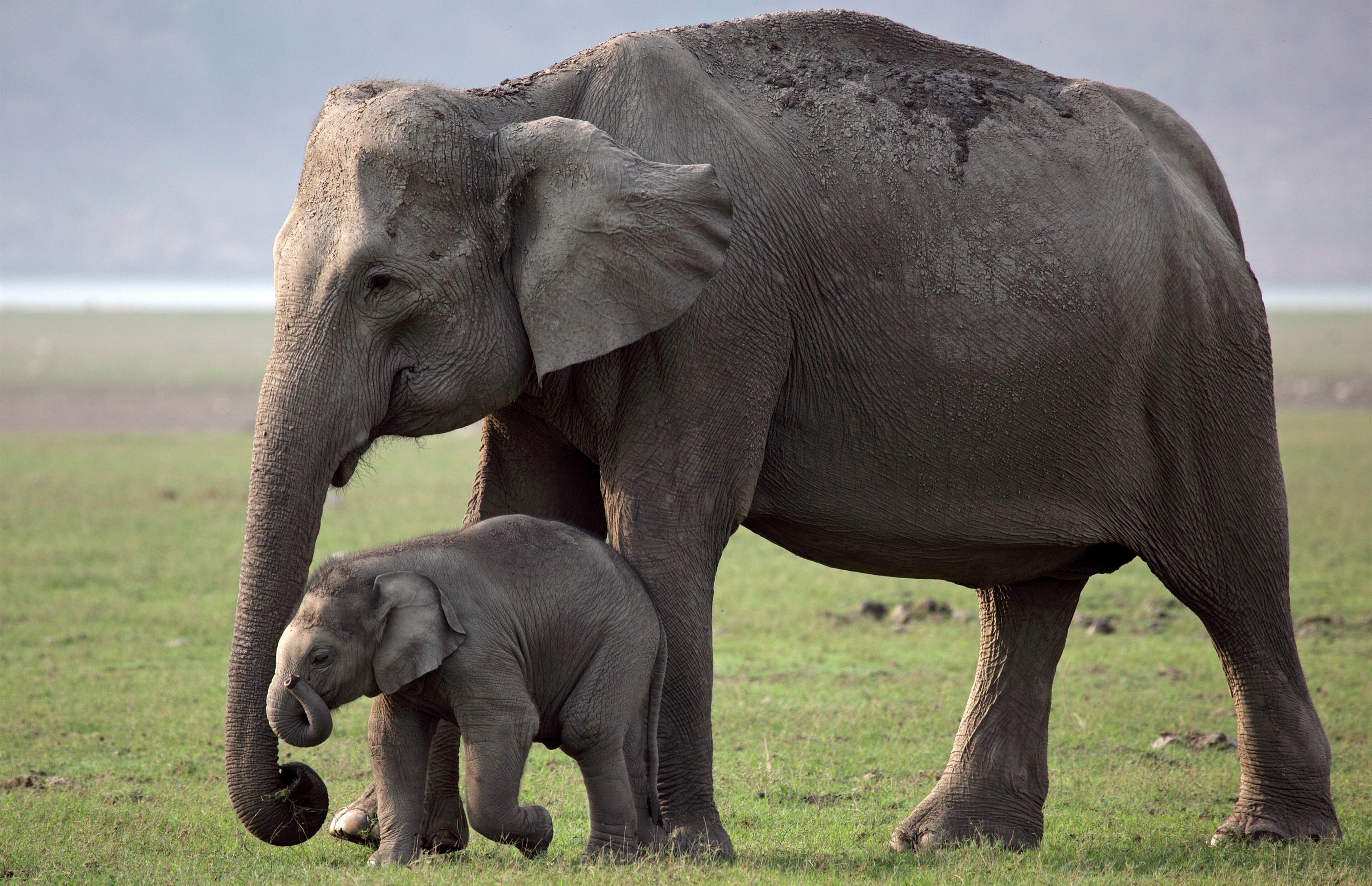 Cutest Child With Mother Elephant 4k Wallpaper
