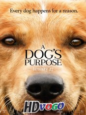 A Dogs Purpose 2017 in HD English Full Movie