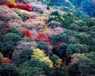 Colorful Arashiyama Mountains in Fall