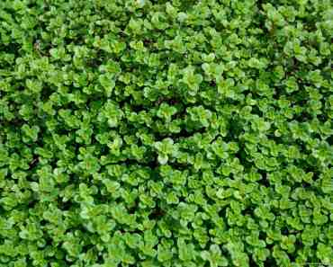 Herb Texture