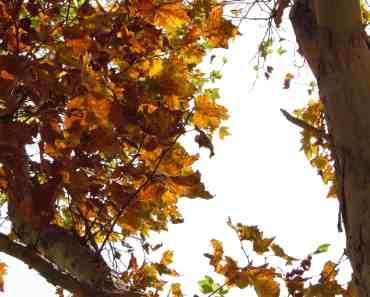 Fall upon us