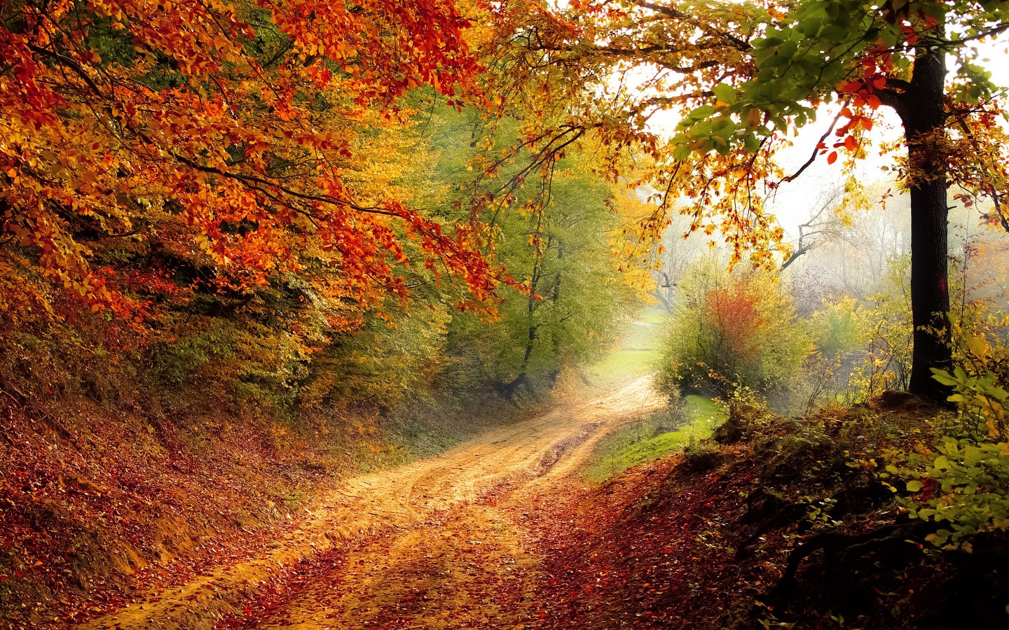 Beautiful Autumn Road Wallpapers Hd Wallpapers Id 16828