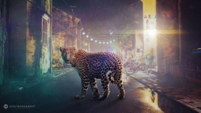 Night Leopard Wallpapers | HD Wallpapers | ID #14140