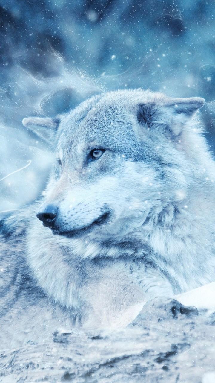 Wallpaper Iphone 6 Plus Wolf Kadada Org