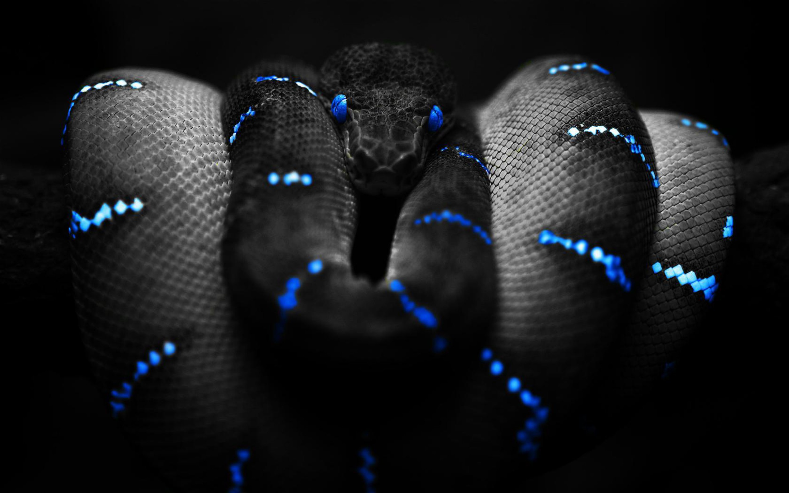snake background | hd wallpapers pulse