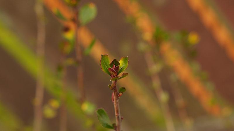plant-web