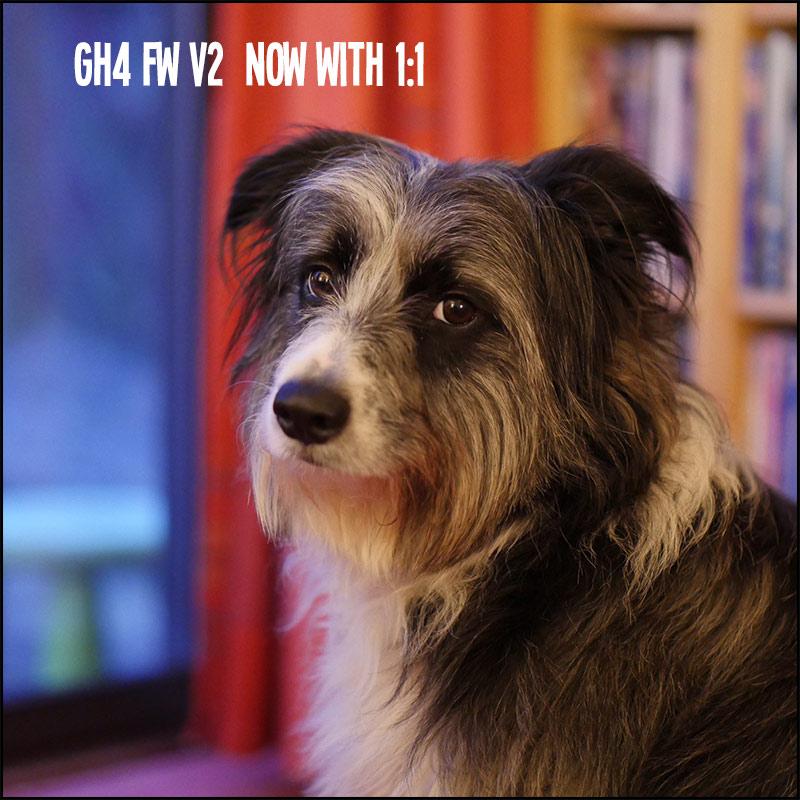 GH4-FW