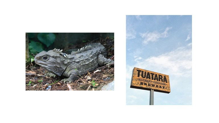 tuatara_images3