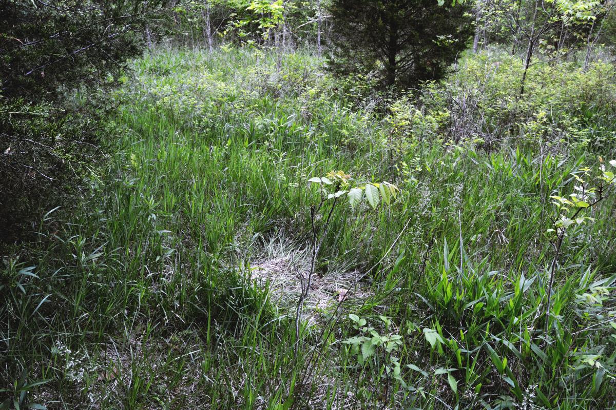 Habitat Management For Deer