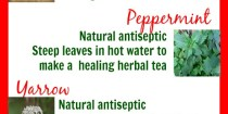 natural urinary tract infection treatment