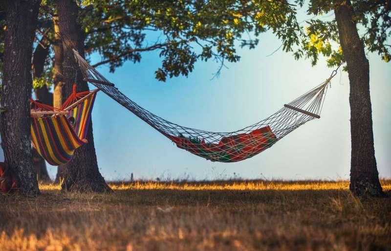 two hammocks under trees in a field
