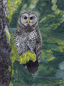 Spotted Owl by Karen T Hluchan