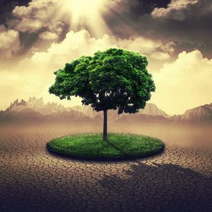 Green Tree Surrounded by Arid Desert