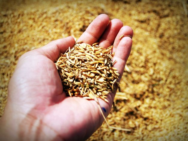 Barley | Glaucoma Prevention: What Foods Are High In Chromium