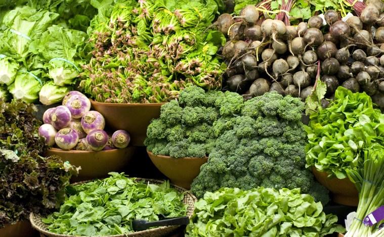 buy Plant Protein