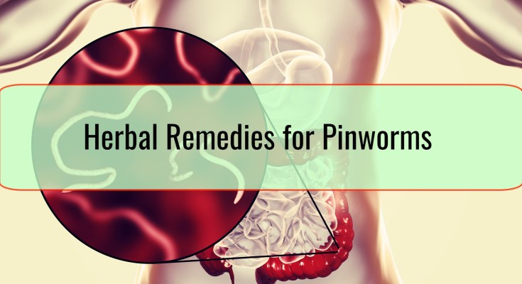 Herbal Remedies for Pinworms