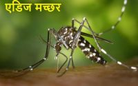 चिकनगुनिया chikungunya causes prevention treatment hindi