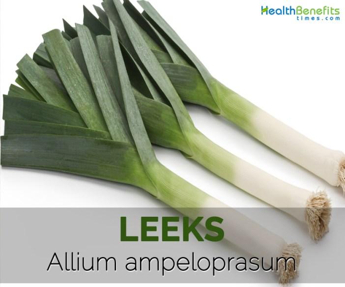Leeks---Allium-ampeloprasum