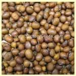 Brun Matif Rouest Soybean