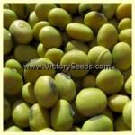 Geant Vert Soybean