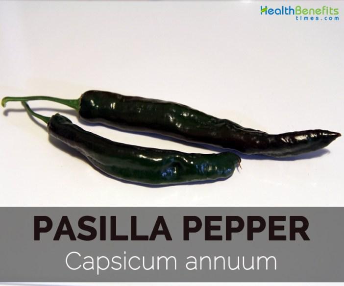 Pasilla-pepper---Capsicum-annuum