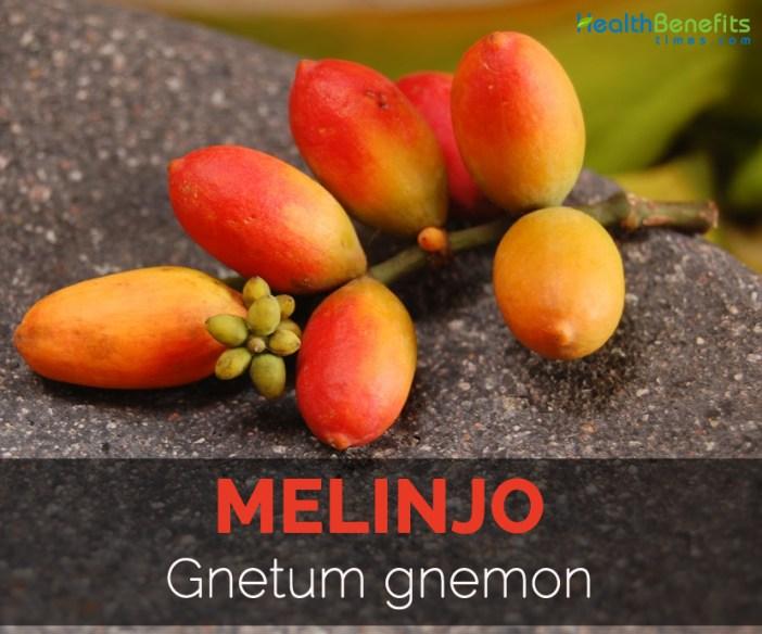 melinjo-gnetum-gnemon